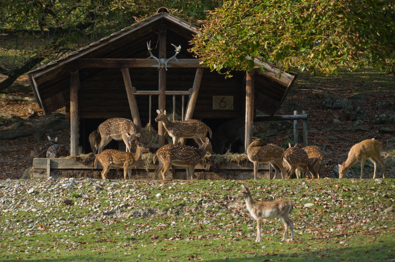 Hirsche im Wildtierpark Heitern